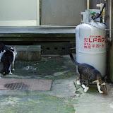 石見銀山の猫はカエルが遊び友達
