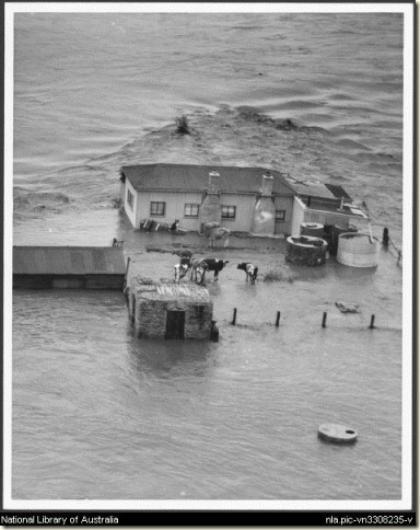 Maitland_Flood_1955
