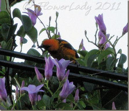 06-13-inkn-bird