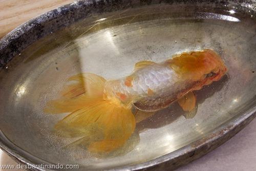 peixes pintados em 3d desbaratinando (21)