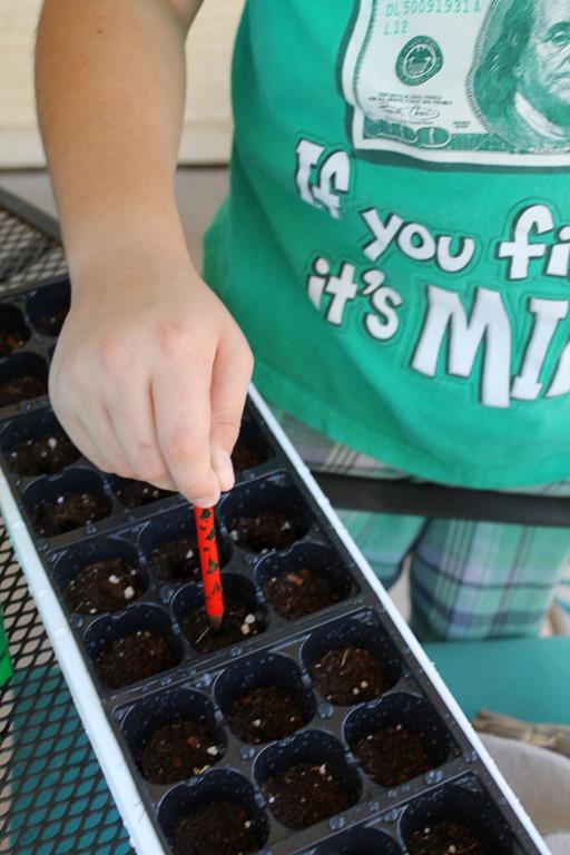 seedling kit 044