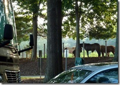 Neighbors at Tanglewood