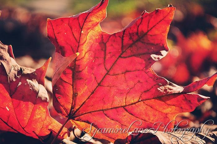leaves-w
