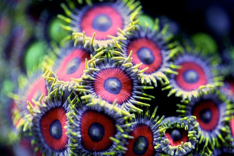 corals-5