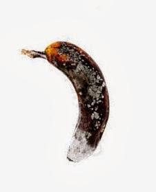 rotten banana2