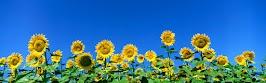 flower panoram_nebesnoe.info_06.jpg