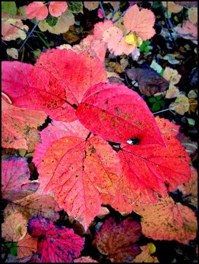 fall_5