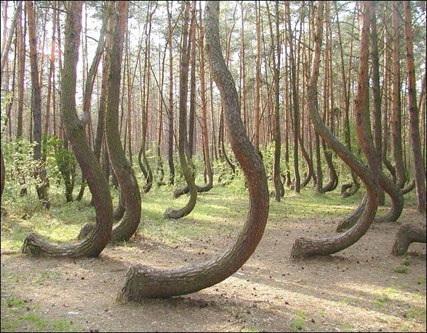 اشجار غريبة3