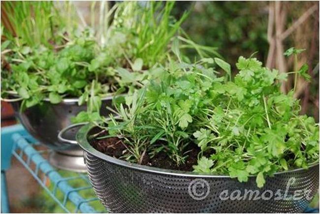 sieve-garden