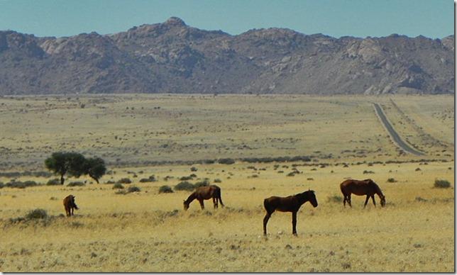 Namibia_DSCN5719