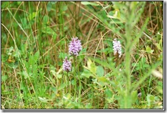 Ufton Fields D50  15-06-2011 15-08-33