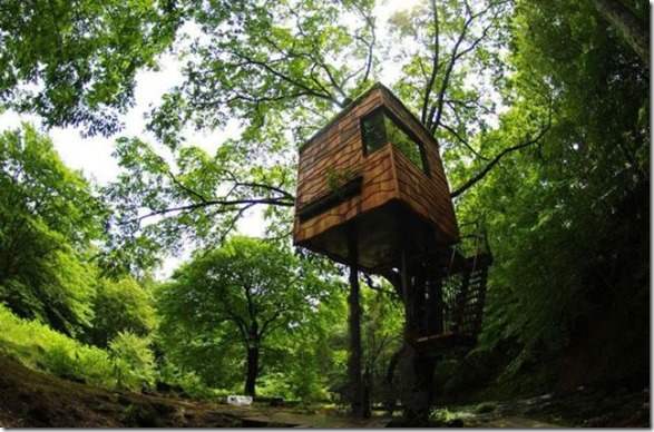 awesome-treehouses-9