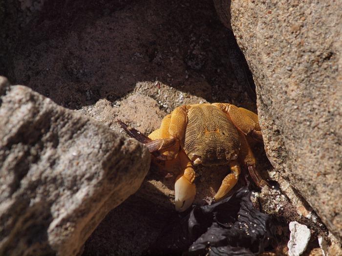 spotting crabs