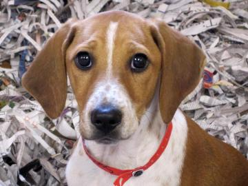 Sander is from the Atlanta Humane Society. To learn more about Sander, click on the link to the shelter below.