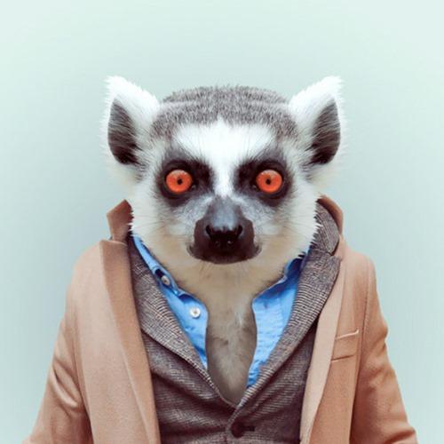 animais roupas humanas - lemur