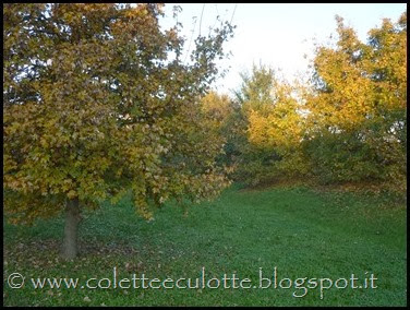 Passeggiando per Padulle - novembre 2013 (57)