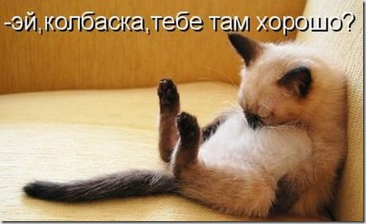 1302214990_kotomatritsa