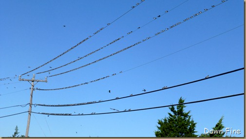 morning walk birds_004