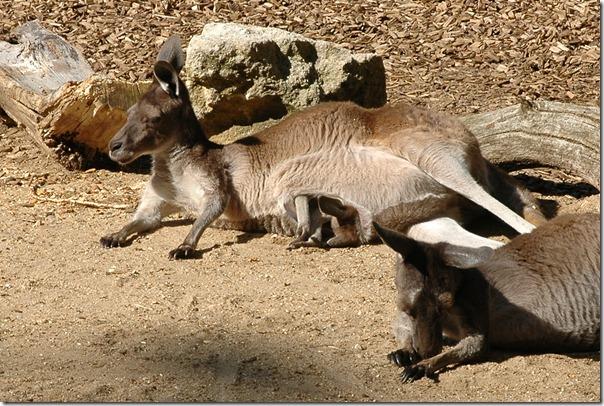marwell zoo 050