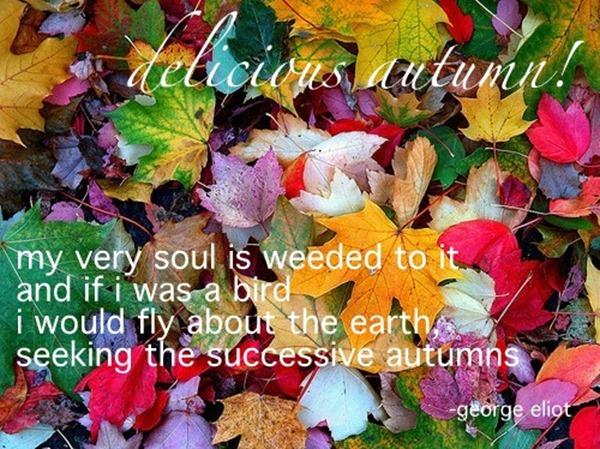 autumn4 2