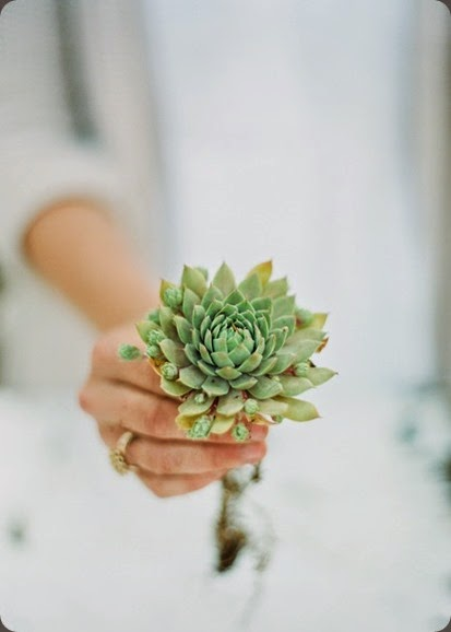 succulent nature compsed and jodi miller photo livingwreathworkshop-sugarmagnolias-9.11