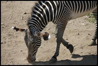 Zoo5 046