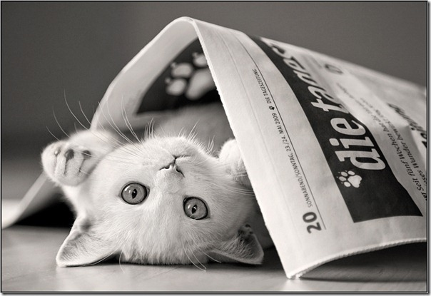 felinos blogdeimagenes (5)