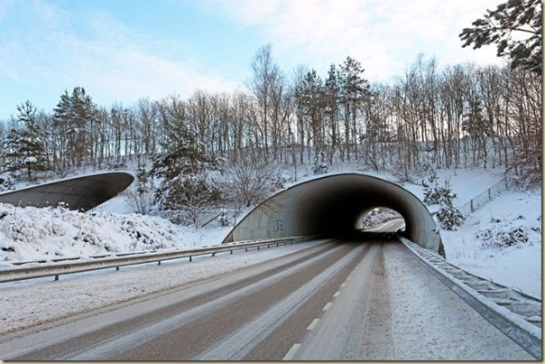 Ponts pour animaux - passages à faune (8)