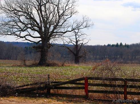 7. Farm field-kab