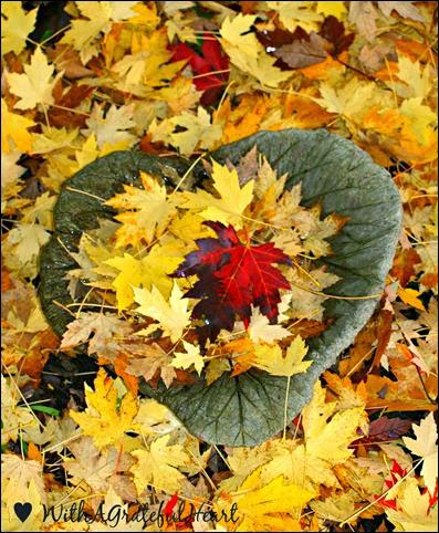 Leaves in a Leaf