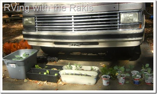 Portable pot garden - great for living in an RV - RVing with the Rakis