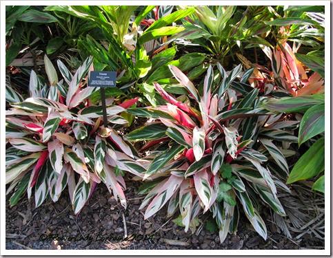 11-20-foliage-triostar