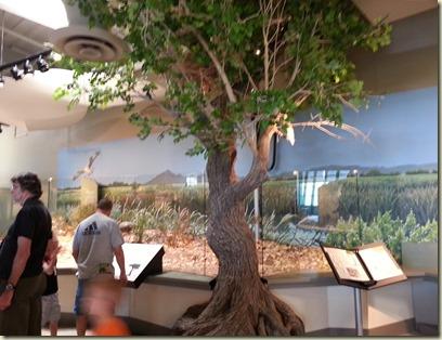 Wetlands Visitor Cntr Las Vegas (4)