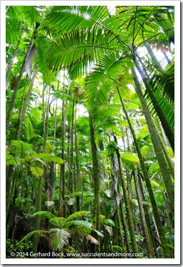 140726_HawaiiTropicalBotanicalGarden_0078