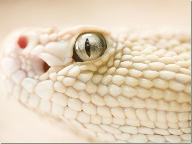 White-snake_1024x768