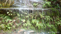 Blue Mountains - Wasserfallgewächse