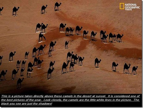 great_images_that_go_together_with_astounding_facts_640_13