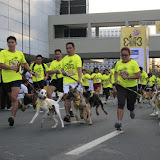 Pet Express Doggie Run 2012 Philippines. Jpg (27).JPG