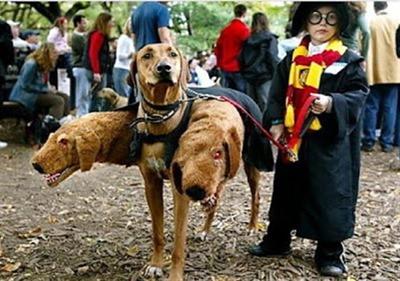 mascotas disfrazadas humor halloween (7)