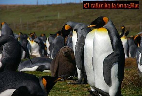 AvesdeMalvinas-ElTallerdelabrujamar-junio0610