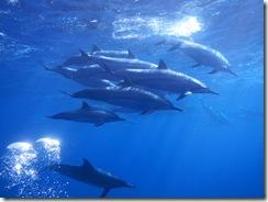 ハワイ島イルカとダイビング