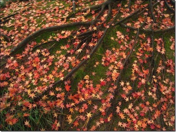 Lindas imagens de folhas do outono (21)