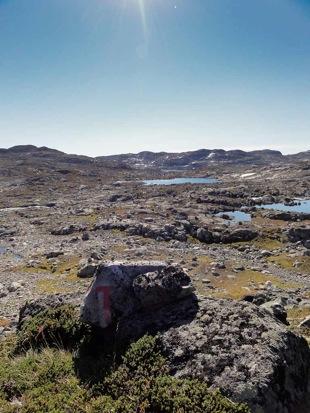 Blue tundra