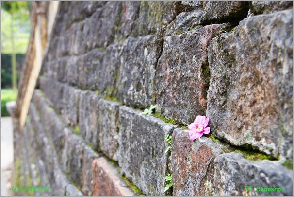 城墙的小花