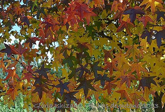 5  Glória Ishizaka - Folhas de Outono 2013
