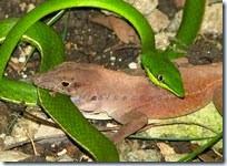 Snake_vs Lizard