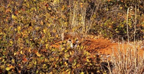 Some best examples of Camouflage