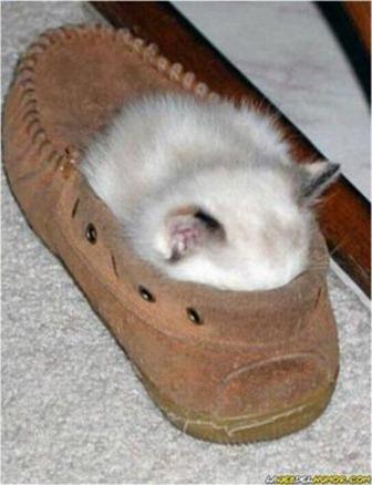 Cats Will Sleep Anywhere 31