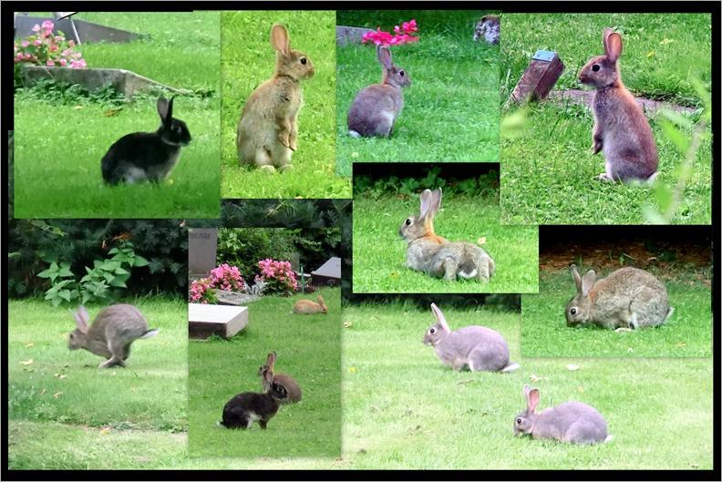 2013-08-02 Rabbits, St Birgitta, cemetery