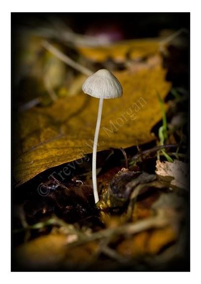 Mini Fungi 4
